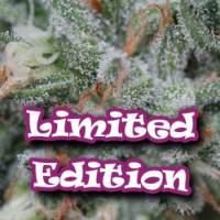 Dark Cookie Feminised Seeds (Limited Edition) Seeds