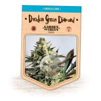 Dresden Green Diamond Feminised Seeds