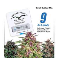 Dutch Outdoor Mix Feminised Seeds