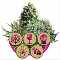 Feminized Mix Feminised Seeds