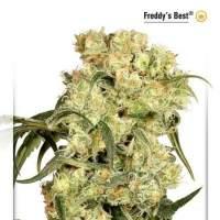 Freddy's Best Feminised Seeds