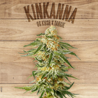 Kinkanna  Feminised  Cannabis  Seeds  Jpg