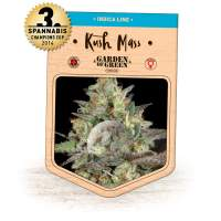 Kush Mass Feminised Seeds