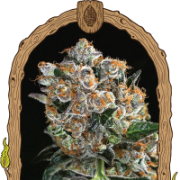 Malasaña Cookies Feminised Seeds