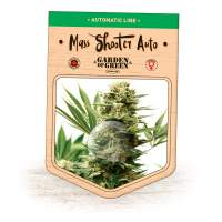 Mass Shooter Auto Feminised Seeds