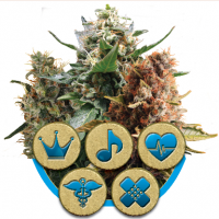 Mix CBD Feminised Seeds