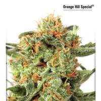Orange Hill Special Feminised Seeds