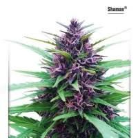 Shaman Feminised Seeds
