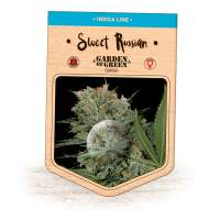 Sweet Russian Feminised Seeds
