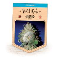 Violet Kush Feminised Seeds