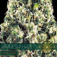 Amnesia Haze AUTO Feminised Seeds