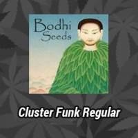Cluster Funk Regular Seeds