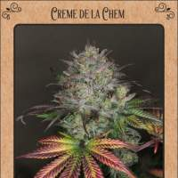 Creme de la Chem Auto Feminised Seeds