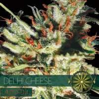 Delhi Cheese AUTO Feminised Seeds