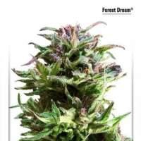 Forest Dream Feminised Seeds