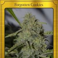 Forgotten Cookies Auto Feminised Seeds