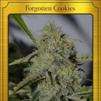 Forgotten Cookies Auto Feminised Seeds
