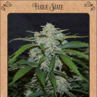 Fugue State Auto Feminised Seeds