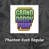 Phantom Kush Regular Seeds