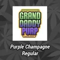 Purple Champagne Regular Seeds
