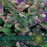 La Blanca Gold AUTO Feminised Seeds