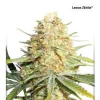 Lemon Zkittle Feminised Seeds