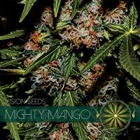 Mighty Mango Bud Feminised Seeds