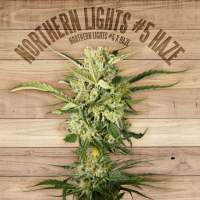 Northern Lights #5 Haze Feminised Seeds