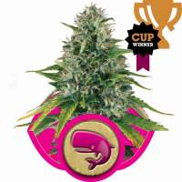 Royal Moby Feminised Seeds