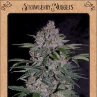 Strawberry Nuggets Auto Feminised Seeds
