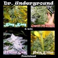 Surprise Killer Mix Feminised Seeds