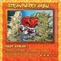 Trading  Card  Strawberry  Akeil  Jpg