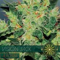 Vision Jack Auto Feminised Seeds