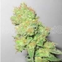Mendocino Purple Kush Feminised Seeds