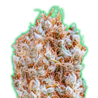 Monster Zkittles Feminised Seeds