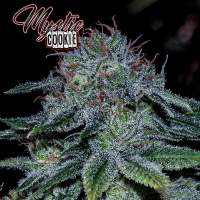 Mystic  Cookie  Feminised  Cannabis  Seeds