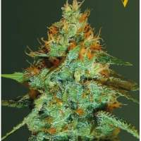 Super  Extra  Skunk  Auto  Feminised  Cannabis  Seeds