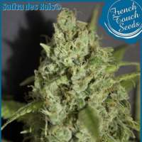Sativa des Rois Feminised Seeds